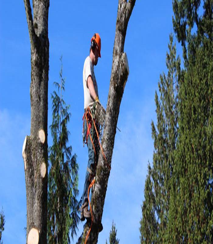 Tree Service Image 1